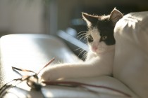 Kako su mačke postale kućni ljubimci