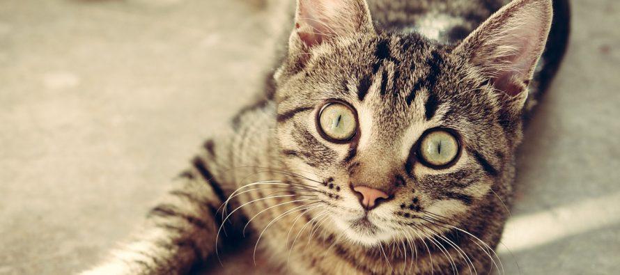 """Maca od muke """"progovorila"""""""