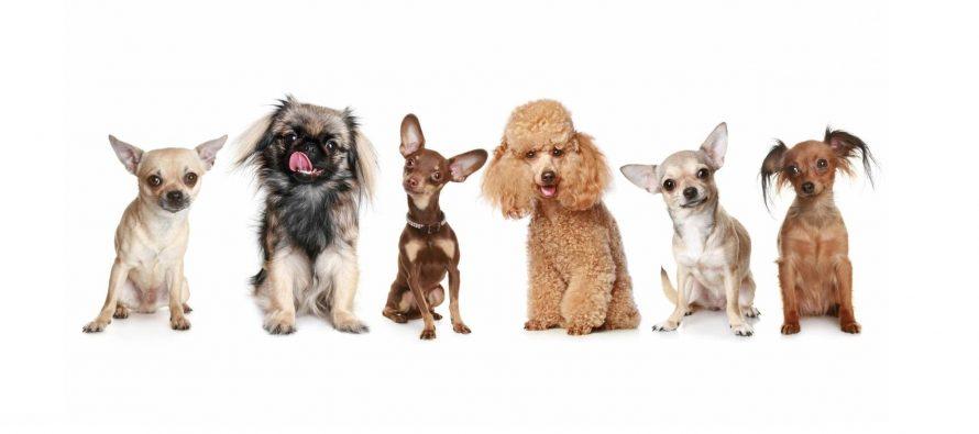Najdugovečnije rase pasa