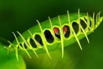 Biljke mesožderke – čudna stvorenja