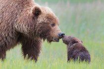 Roditeljska ljubav u životinjskom svetu
