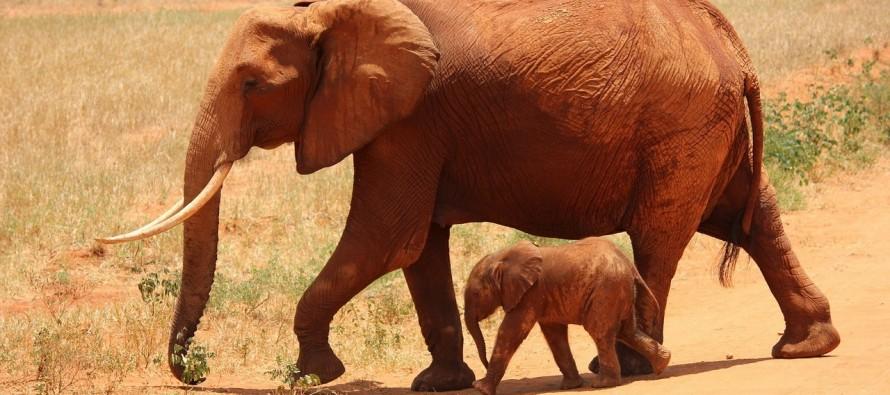 Koliko mali mogu biti mladunci životinja?