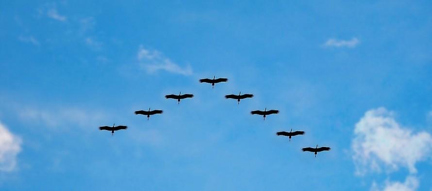 Putovanje na jug: Kako ptice selice znaju kuda da lete?
