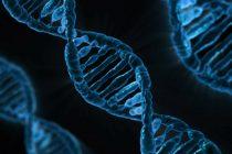 Šta utiče na mutaciju gena?