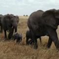 elephant-687338_1920