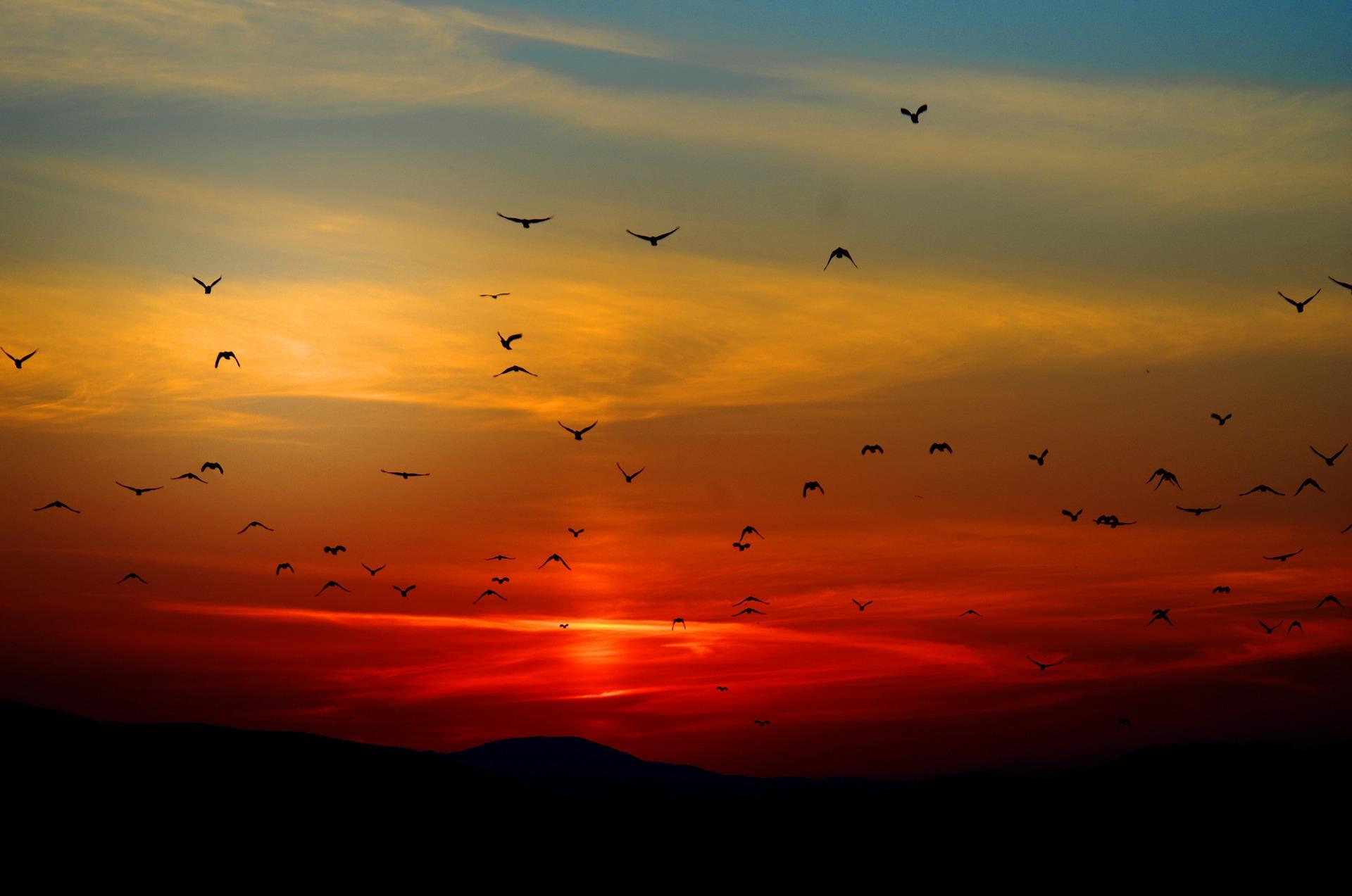 sunset-100367_1920