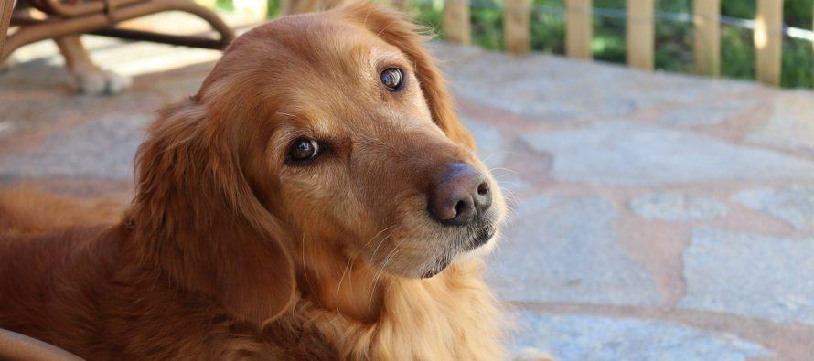 Kako psi znaju kako se osećamo?