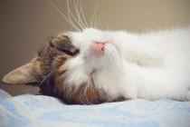 Koja životinja spava najduže?