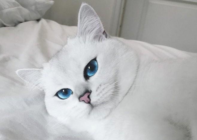 kobi macka