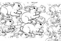 Koliko zečeva se nalazi na slici?