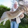 najveci zec na svetu