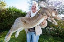 On je Džef – najveći zec na svetu!