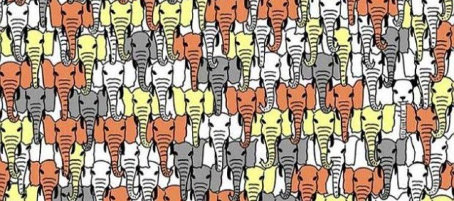 Pronađi pandu među slonovima!