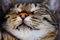 Zašto mačke stalno spavaju?