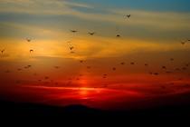 Da li ptice mogu da spavaju dok lete?