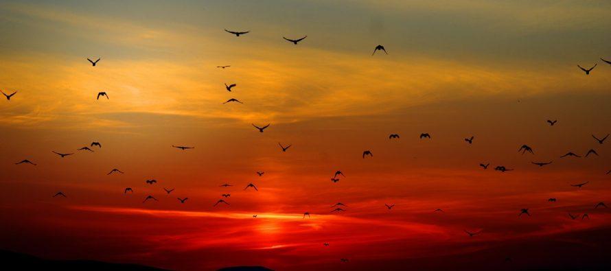 Zašto ptice lete na jug?