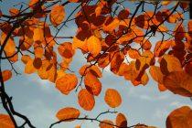 Šta je jesenja ravnodnevnica?