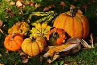 Jesenja riznica vitamina