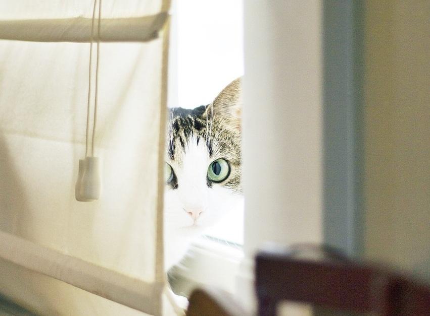 maca se krije