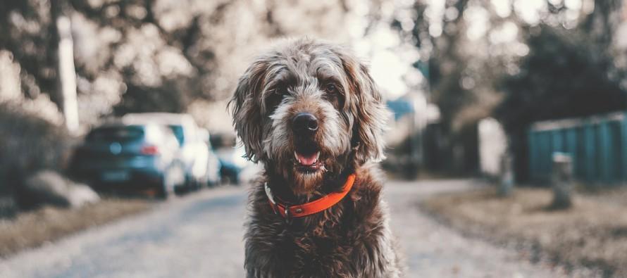 Najverniji čovekov prijatelj: Zanimljive činjenice o psima!