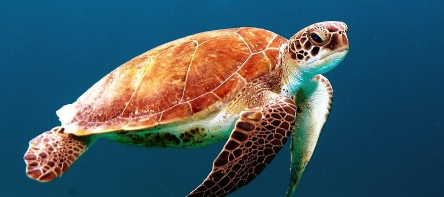 Najzanimljivije činjenice o kornjačama