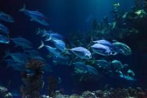 Koliko je okean dubok? (VIDEO)