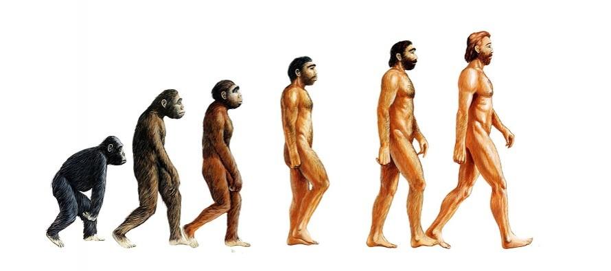 Turska: U školama se ne spominje Darvinova teorija