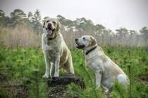 8 najpametnijih rasa pasa