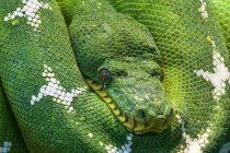 Otkrivena trooka zmija!
