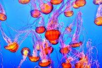 Pogledajte morsko stvorenje koje liči na vatromet