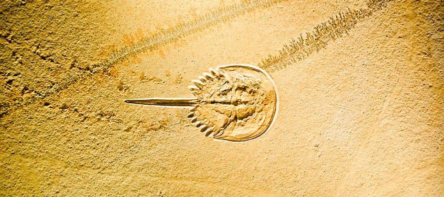 Dečak slučajno otkrio fosil star 90 miliona godina na odmoru u Kolumbiji