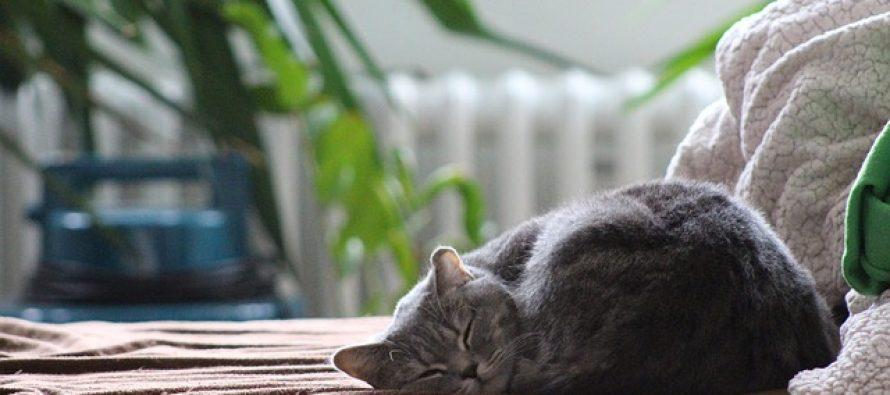 Šta sve to mačke rade kada ostanu same kod kuće?