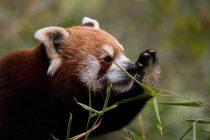 Otkriveno preko hiljadu novih sisara u poslednjoj deceniji!