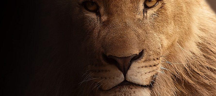 Južnom Afrikom vladali džinovski lavovi