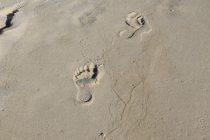 U Severnoj Americi otkriveni otisci ljudskih stopala stari 13.000 godina