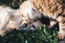 Neverovatna prijateljstva životinja