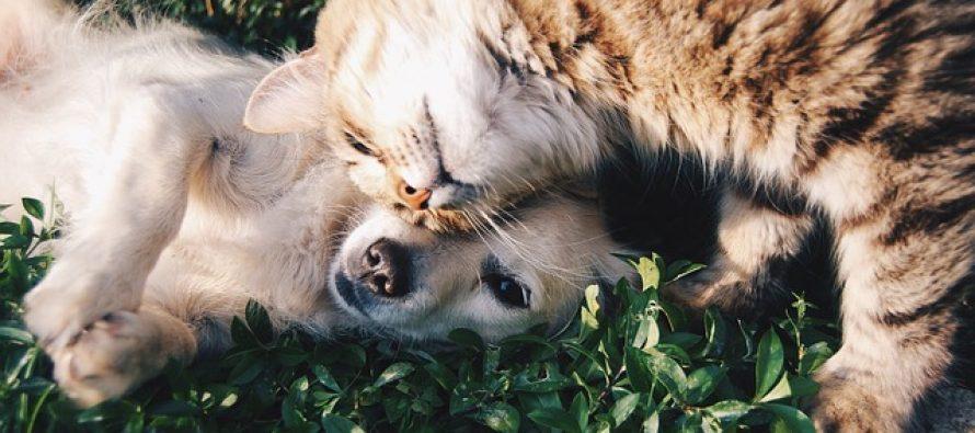 Ko je inteligentniji psi ili mačke