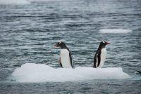 Stvari koje niste znali o pingvinima