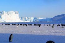 """Pogledajte kako izgleda """"selfi"""" arktičkih pingvina"""