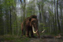 Dlakavi mamut iz tropskih šuma
