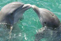 Osećaju li delfini tugu za stradalim članom?