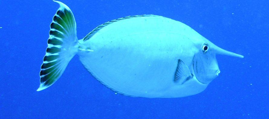 Koje to životinjske vrste imaju neobične noseve?