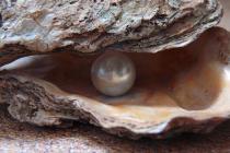 Znate li kako školjke prave bisere?