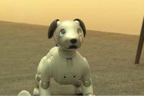 Upoznajte robota kućnog ljubimca!