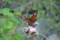 Znate li kako nastaje leptir?