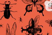 Da li su insekti hrana budućnosti?