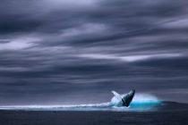 Otkrivena nova vrsta kitova