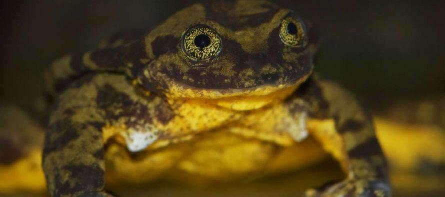 """Romeo, """"najusmaljeniji žabac na svetu"""" posle 10 godina sreo svoju Juliju!"""