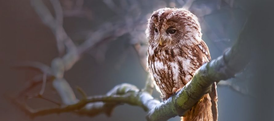 Da li ste znali da… Neke od najčudnijih činjenica o životinjama
