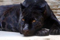 Veliki povratak nekih ugroženih životinjskih vrsta u 2019!